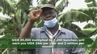 Harvest Money Expo: Washington Mugerwa, a banana farmer sharing insights on Matooke farming.