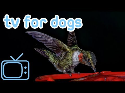 Videos for Dogs! TV Entertainment for Dogs with Relaxing Music!