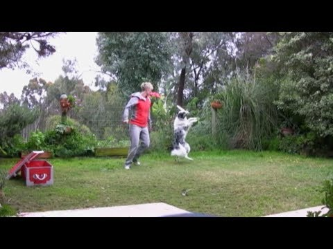 Splash's old pirate canine freestyle routine  - dog tricks training