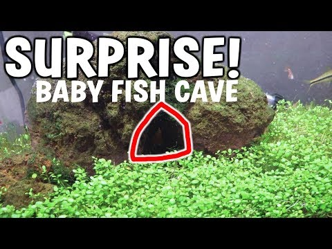 SURPRISE Baby Fish CAVE!