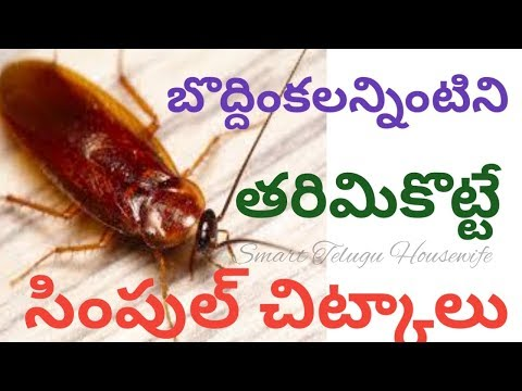 How to Get Rid of Cockroaches from home in Telugu |Home remedies to get rid of cockroaches from home