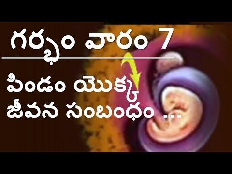 Pregnancy   Telugu   Week by week    Week 7