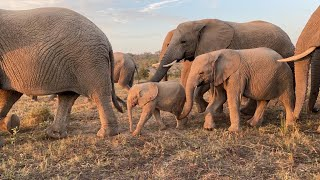 Bubi and Kumbura spend special time with Khanyisa during their morning walk