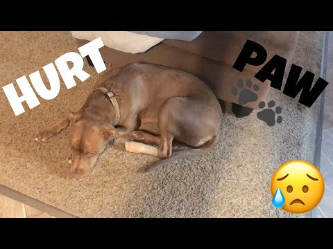DOG HURTS PAW!