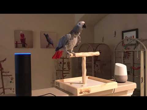 Alexa All lights off says Petra the African Grey