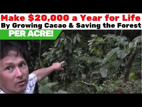 Make $20k a Year for Life & Save the Forest by Growing Chocolate in the USA
