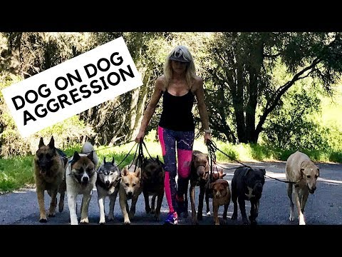 Crisis Management for Dog Aggression with your Personal Dogs