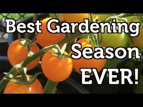 My Best Gardening Season In Review