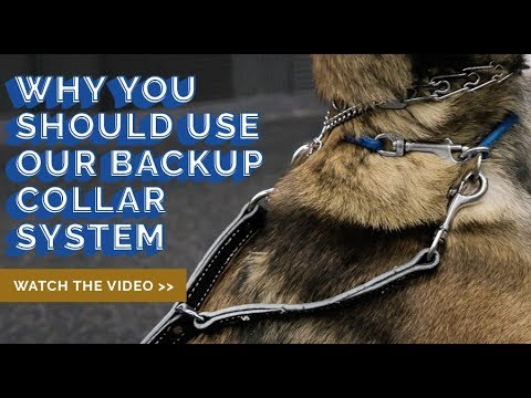 Prong Collar Safety Tip