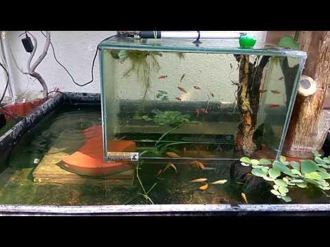 Vacuum Suspended Aquarium