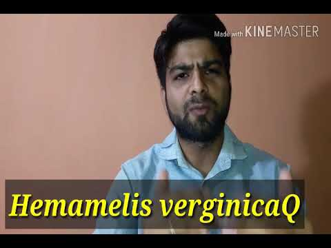 Hemamelis Virginica for bloody discharge, bloody piles, bleeding nose, bleeding mouth in homeopathy.