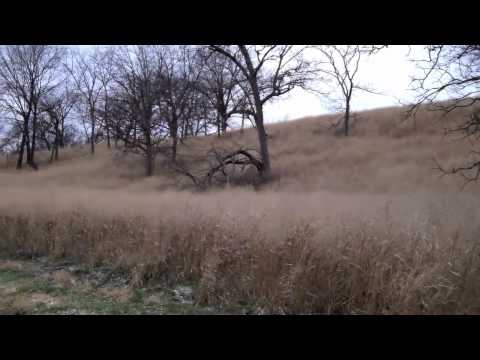 Grand Oaks - 100 Acres of Hunting & Recreational Land for Sale in Knox County Illinois