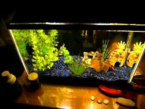 10 gallon betta aquarium