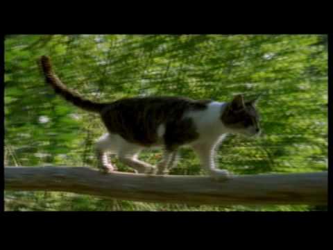 House cat body