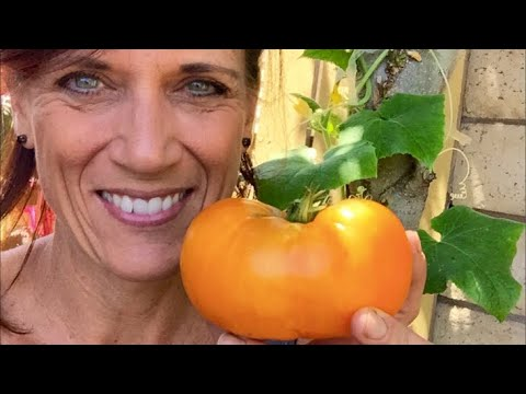 🍅 LIVE: 3 Tips to Grow MORE Tomatoes (replay)