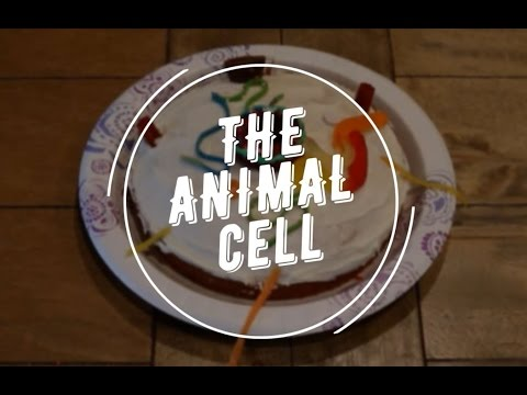 Jena and Christy's animal cell cake project (f)