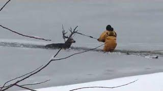 Deer Rescued from Colorado Reservoir II ViralHog