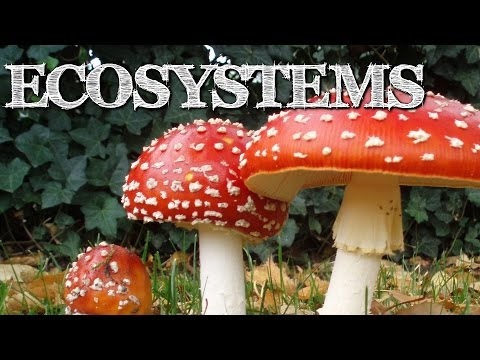 Understanding Ecosystems for Kids: Producers, Consumers, Decomposers - FreeSchool