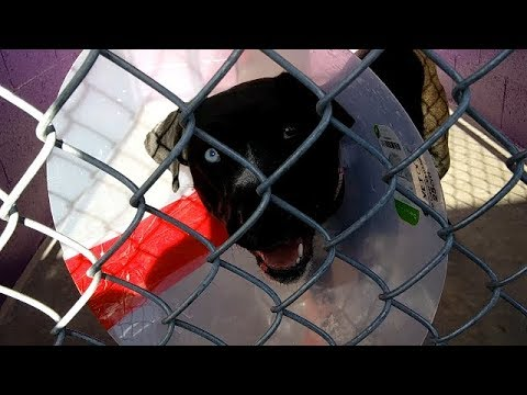 Humane Society of Southern Arizona 4-28-18 Doggie Adoptable - Quin 2 Year Old Female Doggie