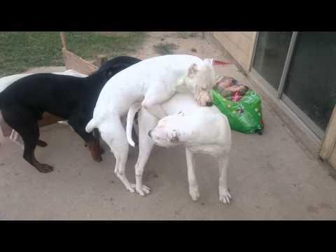 Xxx Mp4 Female Dog In Heat 3gp Sex
