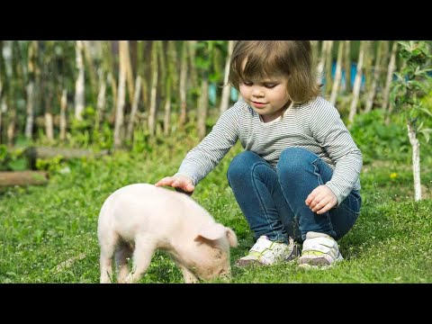 Do Potbellied Pigs Make Good Pets? | Pet Pigs