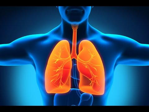 Healthy Lungs, How To Improve Lung Function, Lung Mucus, Lung Cleanse For Smokers, Lung Wash