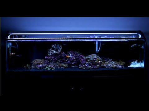 12 Gallon Mr. Aqua Reef Tank - Week 10