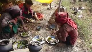 Cooking karelaa which is available in village ll Primitive technology