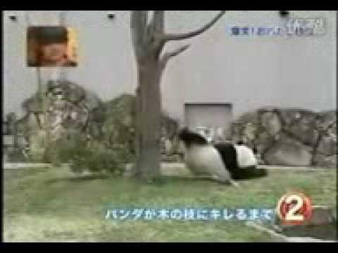 Xxx Mp4 True Kung Fu Panda 3gp 3gp Sex