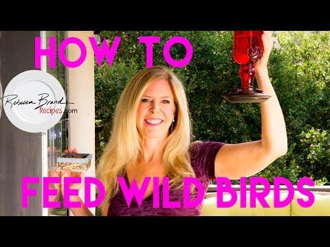 A Recipe For Attracting Wild Birds