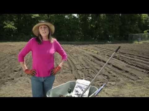 How To Amend Sandy Soil | Troy-Bilt®