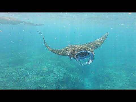 Stumbled Upon MASSIVE Sea Creatures