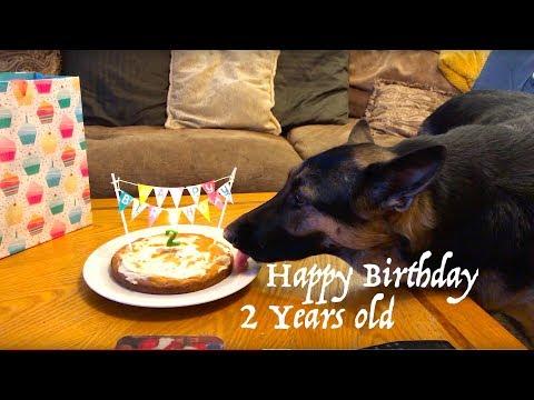 Dog Cake Recipe 2 years Old German Shepherd Birthday - Baking - Eating Cake + Presents cake recipe