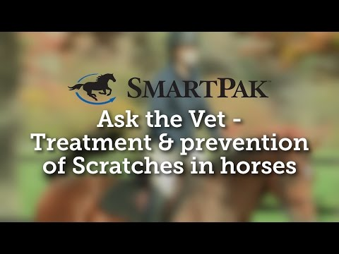 Ask the Vet - Treatment and prevention of Scratches in horses
