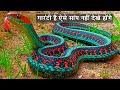 ये सांप आपने कभी नहीं देखे होंगे10 Most Beautiful Snakes In The World Colorful Snakes gorgeous snake