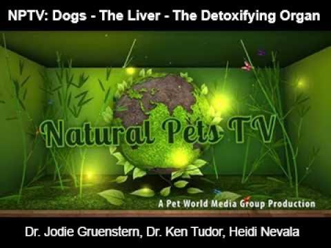 Natural Pets TV: Dog  Episode 5 - The Liver - The Detoxifying Organ