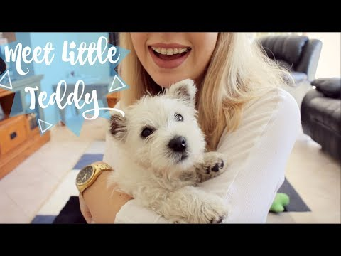 We Got Another Puppy?! | TheDogBlog