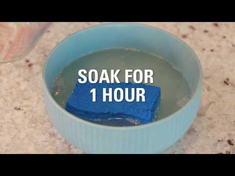Refresh a Smelly Sponge