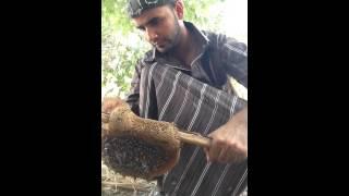 كيفية قص عسل النحل