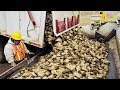 Amazing Modern Technology Automatic Sugar Beet Processing Plant