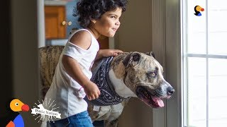 Pit Bull Dog Has Loved His Little Sister Since Before She Was Born - EROS | The Dodo Pittie Nation