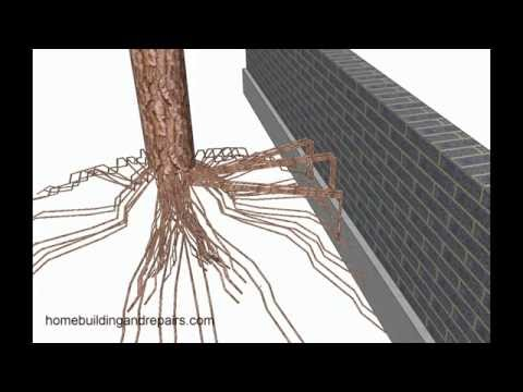 Tree Roots Can Move Small Retaining Walls - Landscaping Design Tips