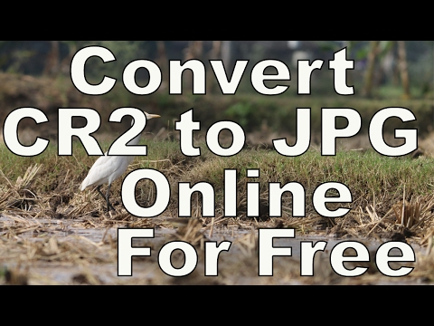 [ Fast ] How to Convert Cr2 to JPG in 2 Steps Online