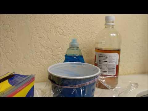 DIY Fruit Fly Death Trap