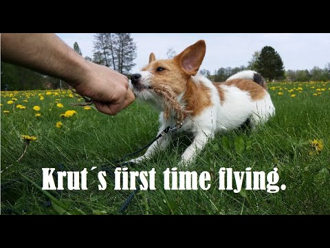 First time VFR flying with a PUPPY!