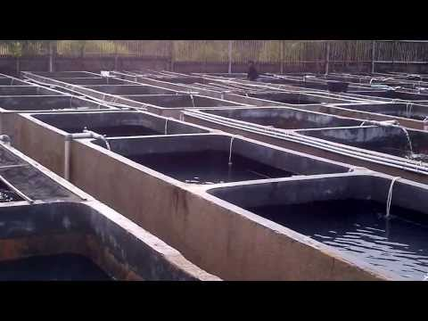 Concrete Tanks as Growing Facility of Grouper