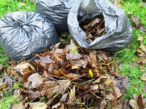 How to Make Leaf Mold - Improve your Garden Soil
