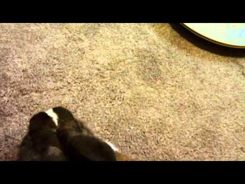 How to tame/bond with your rabbit ( Request)