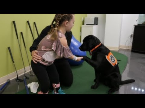 Meet Vandy, Mary Free Bed's animal-assisted therapy dog