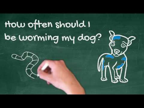How Often Should I Worm My Dog